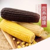 【玉米皇后】三色组合糯玉米试吃装